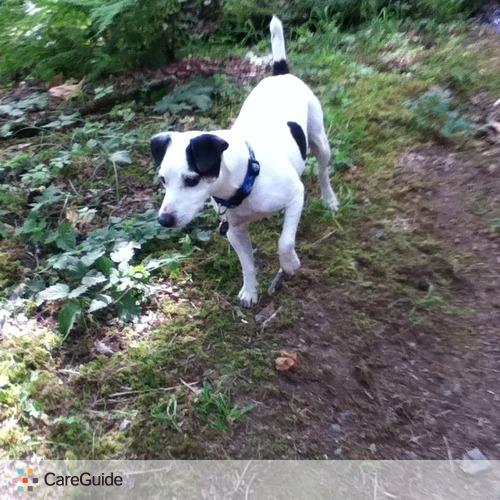 Pet Care Provider Daniel L's Profile Picture