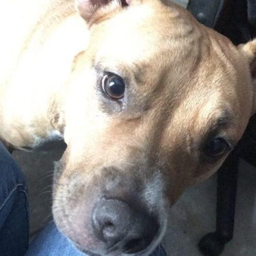 Pet Care Job Aezia S's Profile Picture