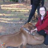 Dog Walker, Pet Sitter in Bunnell