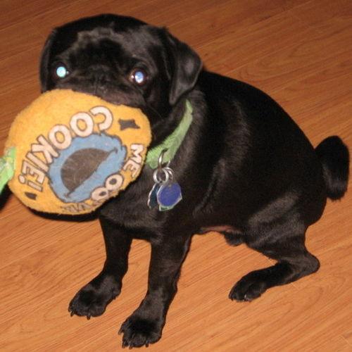 Pet Care Provider Dawn M Gallery Image 2