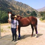For Hire: Professional Pet Service Provider in Burbank, California