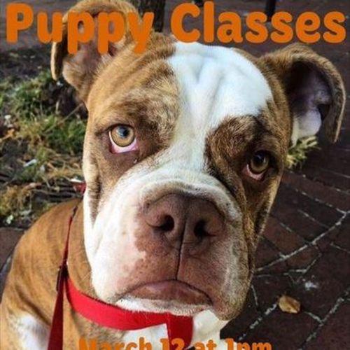 Pet Care Provider Carey Bolduc Gallery Image 1