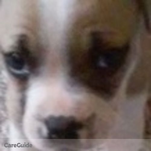 Pet Care Provider Nequia Maloy's Profile Picture