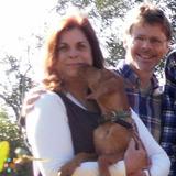 Dog Walker, Pet Sitter in Tampa