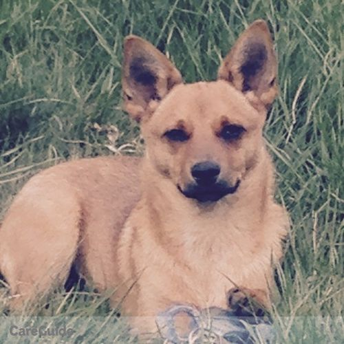 Pet Care Job Connie Mesteth's Profile Picture