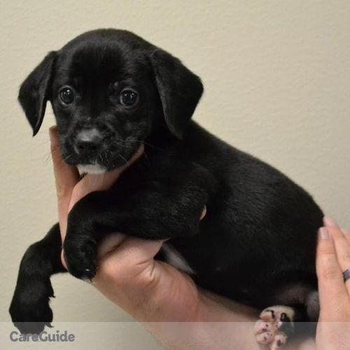Pet Care Job Jen L's Profile Picture