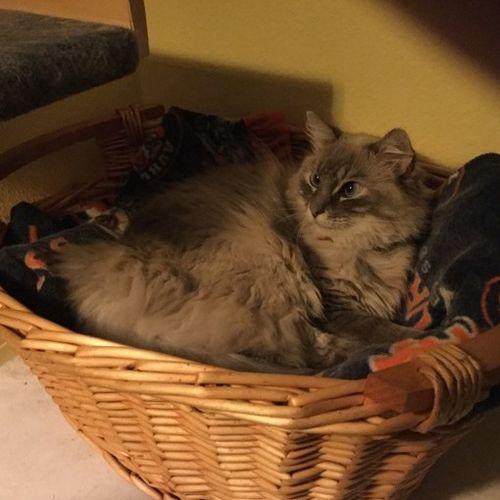 Pet Care Provider Mellody Kim West's Profile Picture
