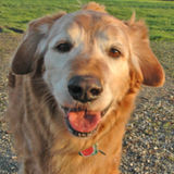 Caring, Reliable, Honest Pet and House Sitter with Flexible Schedule