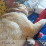 Dog Walker, Pet Sitter in Okotoks