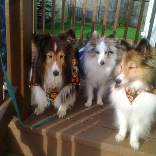 Pet Care Provider Karen Phillips's Profile Picture