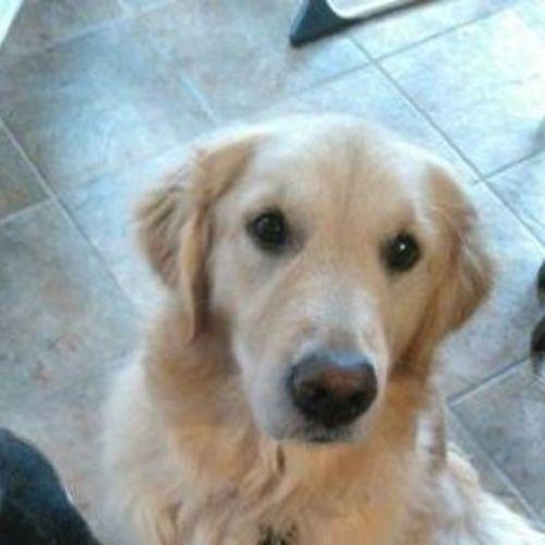 Pet Care Provider Debra Tuttle Gallery Image 2