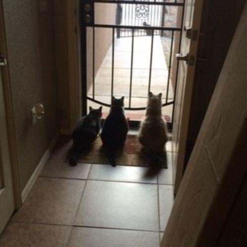 Pet Care Provider David P Gallery Image 3