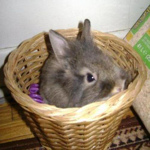 Pet Care Provider Regina V's Profile Picture