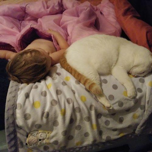 Pet Care Provider Jacqueline B's Profile Picture