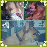 Fun & Reliable Pet Companion & Farm Sitter