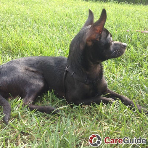 Pet Care Provider Kristin Wilkerson's Profile Picture