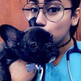 Pet Sitter Looking For Job Opportunities
