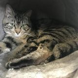 Cat Foster for Military Personnel Wanted in Virginia Beach