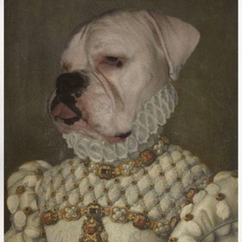 Pet Care Job Kaitlin K's Profile Picture