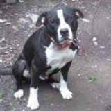 Skillful Pet Supervisor in Fort Wayne, Indiana