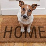 For Hire: Skillful Pet Sitter in Stafford, Virginia