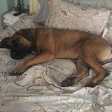 Flexible Dog Walker Available Immediately