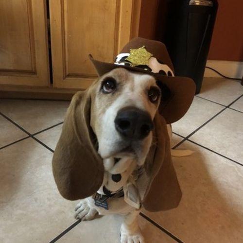 Pet Care Provider Solana M's Profile Picture