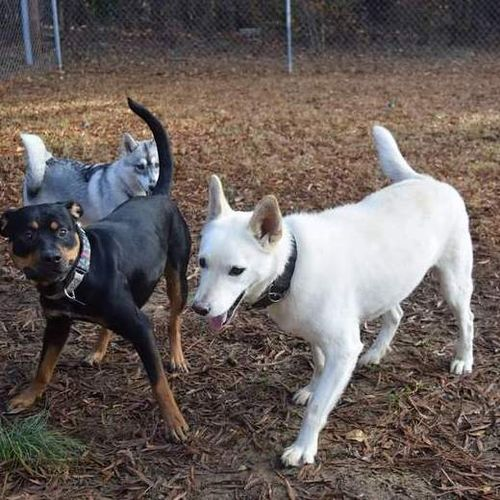 Pet Care Provider Amanda R Gallery Image 1