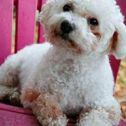 Pet Care Provider Gerene Keesler Gallery Image 1