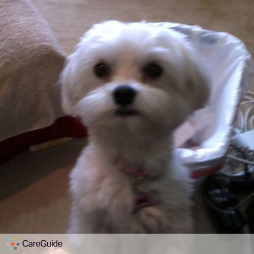 Pet Care Job Glenda H's Profile Picture