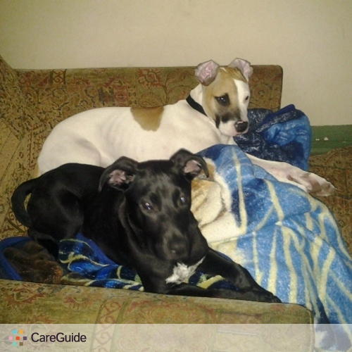 Pet Care Provider mike castillo's Profile Picture
