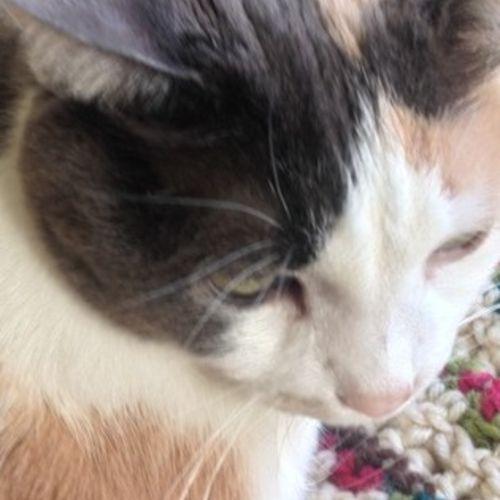 Pet Care Provider Grace Matson Gallery Image 2