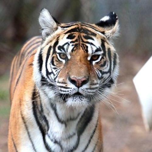 Pet Care Provider Shonda Deneault's Profile Picture