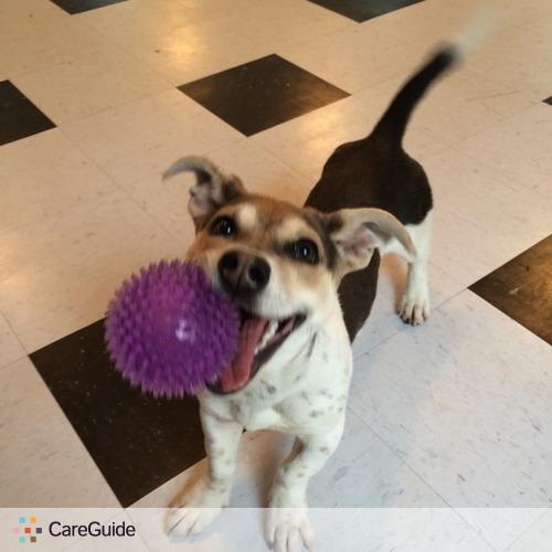 Pet Care Provider Top Dog Pet Sitting & D's Profile Picture