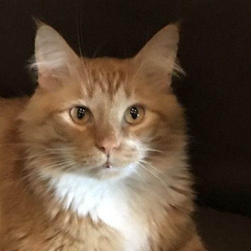 Pet Care Job Tammy S's Profile Picture