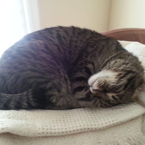 Pet Care Job Maureen R's Profile Picture