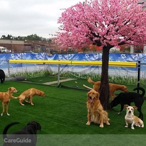 Pet Care Provider Adventure D's Profile Picture
