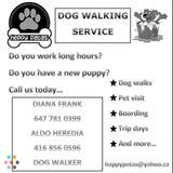 Dog Walker in Toronto