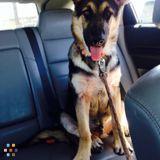 Dog Walker, Pet Sitter in San Angelo