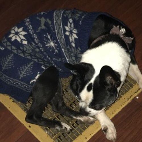 Pet Care Job Faith McKenney Gallery Image 2