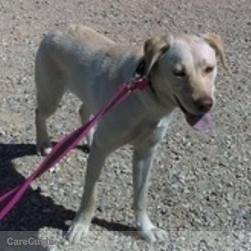 Pet Care Provider Colleen M's Profile Picture