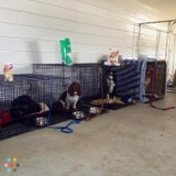 Pet Care Provider in Valleyview