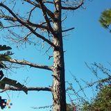Anthony Smith Tree Service & Landscape