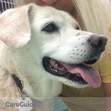 Dog Walker, Pet Sitter in Rock Hill