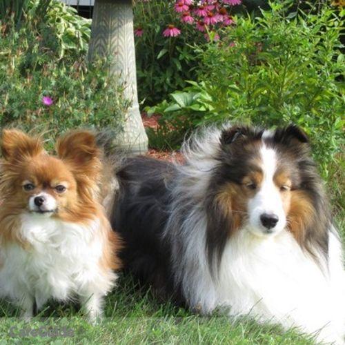 Pet Care Provider Susan Piche's Profile Picture
