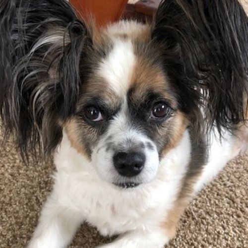 Pet Care Provider Francie G's Profile Picture