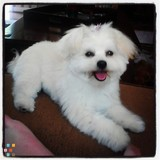 Dog Walker, Pet Sitter in Mission Viejo
