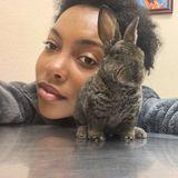 Pet care provider