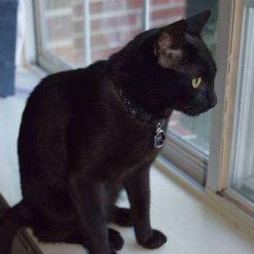 Pet Care Job Amanda Dougherty's Profile Picture