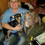 I have been around animals all my life. I have worked as a groomer for over 10 years. Also studied as a vet tech.